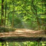 Teichgrundquelle in der Dresdner Heide
